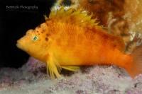 2011_Fun Dive (Jul 31)_008i