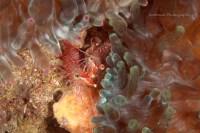 2011_Fun Dive (Jul 31)_109i