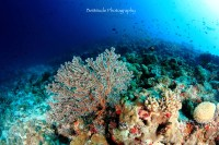World of Underwater