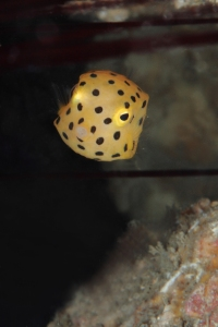 2012_Fun Dive (Jun 3)_032