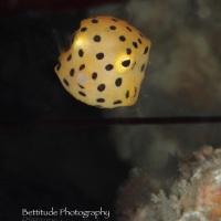 2012_Fun Dive (Jun 3)_032i